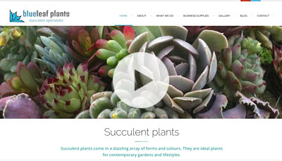 Website Design Blueleaf Plants